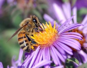 What do worker bees do?