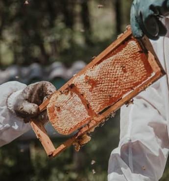 Honeybee frame